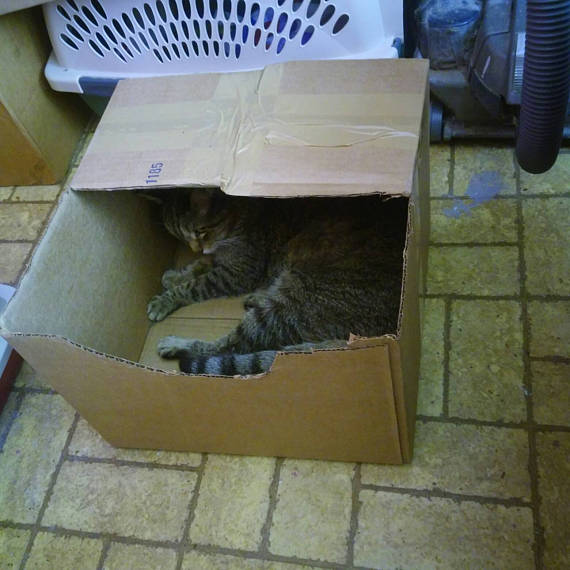 chili in her safe house