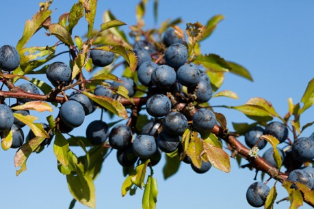sloe-dave kilbey photography