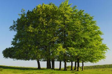 Beech-trees Daily Mirror