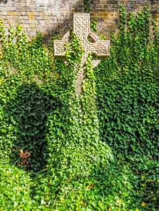 English Ivy on