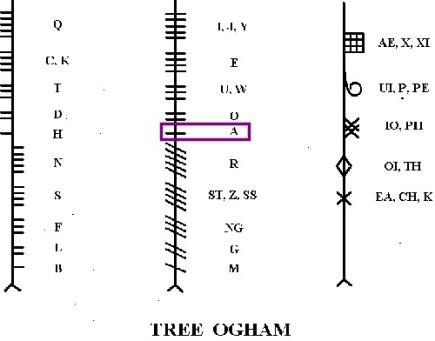 Alim Ogham Pine