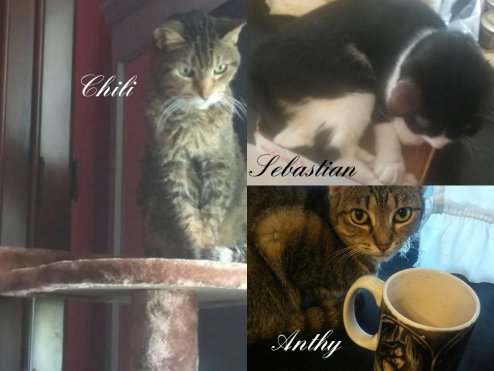Our Cats Collage 2