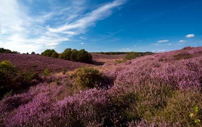 heather_hills_main countrylife dot co dot uk