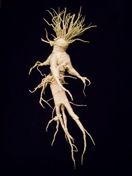 From the Wortcunners Cabinet – Mandrake or Mayapple | Speaking of Witch  Wands & Magickal Things