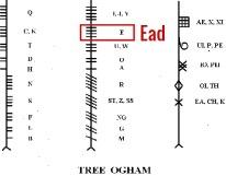 POPULUS ogham Ead