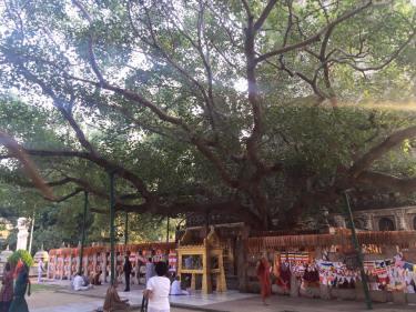Maha_Bodhi_tree_2 by Gr3krishna